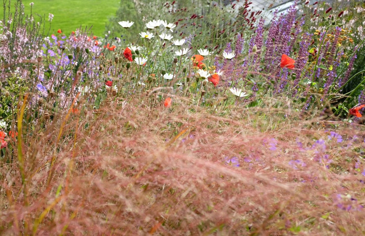 Devon Perennial meadow, late summer colour