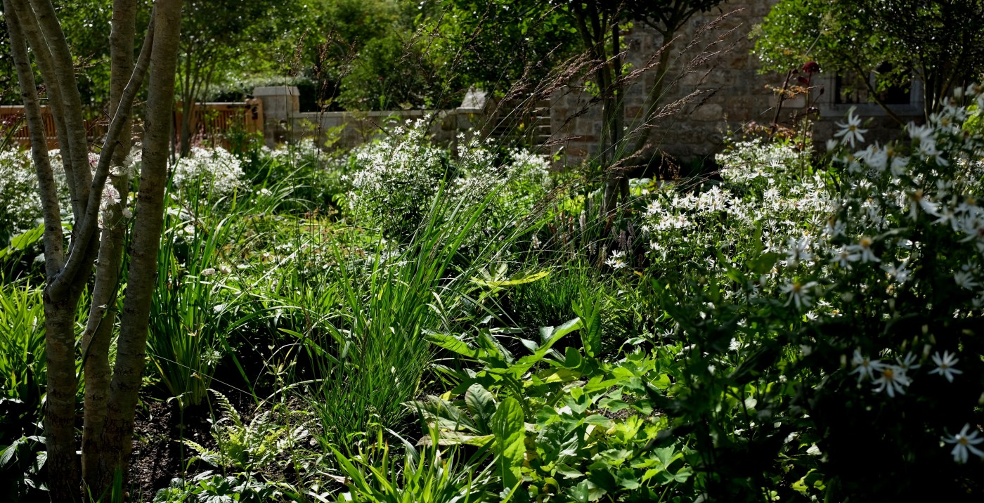 Dartmoor garden design, a new garden  with young planting